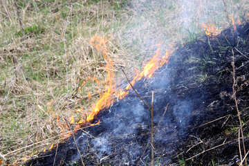 Burning grass in meadow №1726