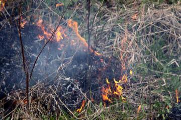 Burning grass in spring №1723