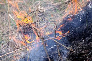 Spring. Burning grass №1728