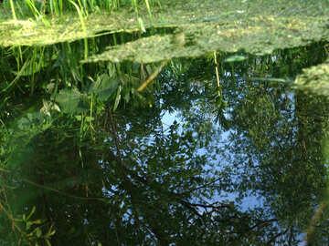 Los árboles y el cielo se refleja en el agua №1028