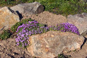 Alpine hill spring №1720