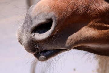 Horse  muzzle №1209
