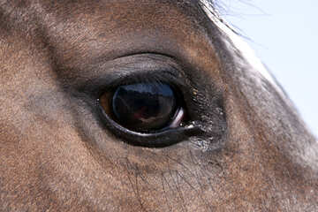 Eye of the horse №1141