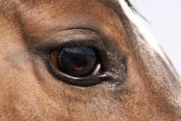 The eye of the horse №1142