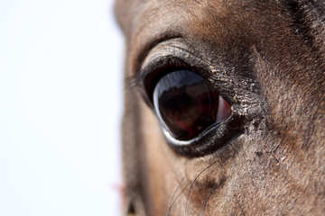 Eye of mares №1140