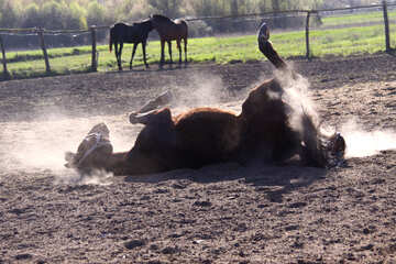 Dust Bath №1632