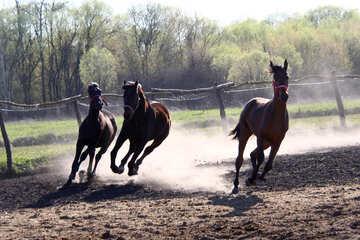 Three horse galloping №1628