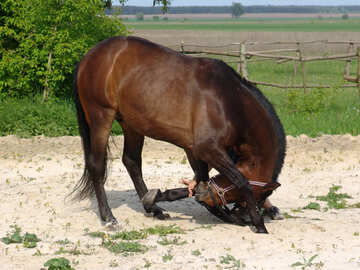 Bow horse №1059