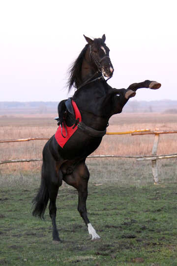 Horse standing on hind legs №1288