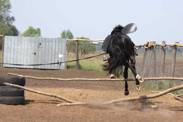 Jump horse №1853