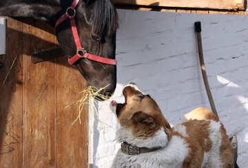 Cavallo e cane №1962