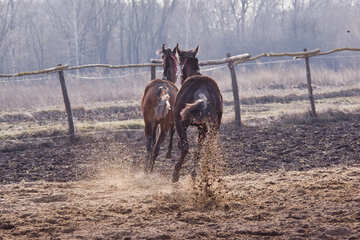 Scurry foals №1245