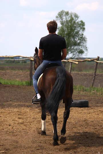 Прогулка на коне №1586