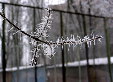 Ice needles on the tree №1011