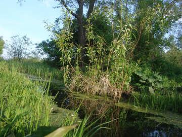 El lago que se ha cubierto  №1031