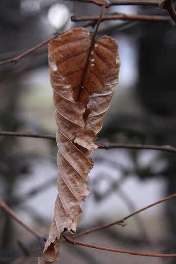 The dry leaf №1414