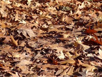Autumn Leaves №1035