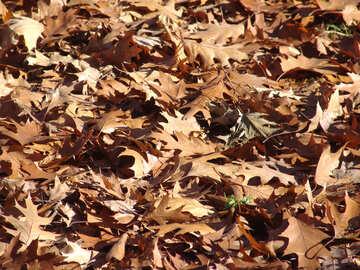 Dry leaves №1036