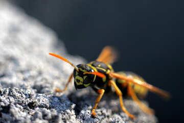 Wasp on stone №1791