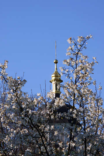 Dome through the flowering branch of Magnolia №1759