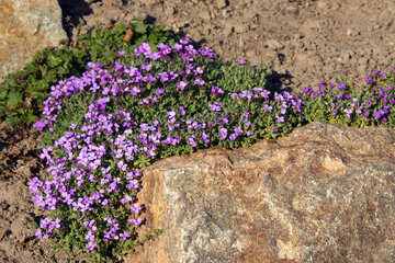 Flowers in stone №1719