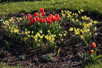 Frühling Blumenbeet №1651