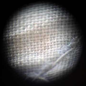 Fibers tissue under the microscope №1038