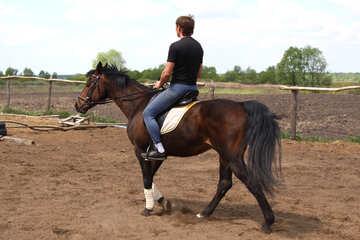 Мужчина учится ездить верхом №1585