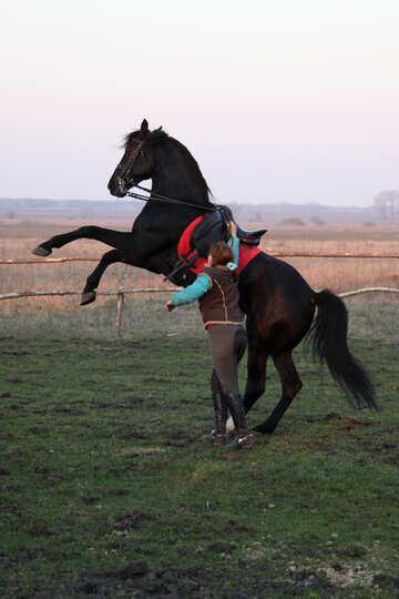 The girl dressers black stallion №1287
