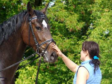 Una niña acariciaba el caballo  №1057