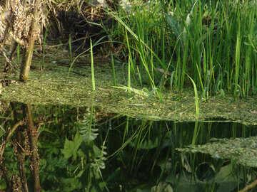 Pond №1032