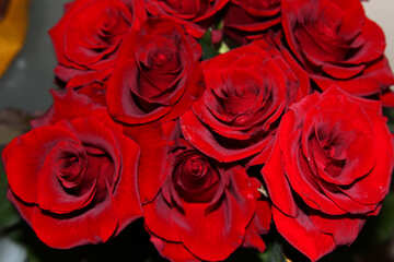Rosso rose Mazzo №1421