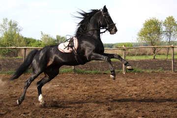 Cheval danse №1849