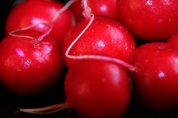 Garden radish №1395