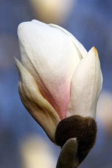 White flower №1764