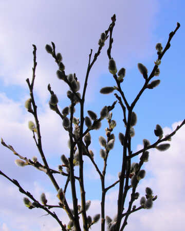 Willow twigs against the sky №1017