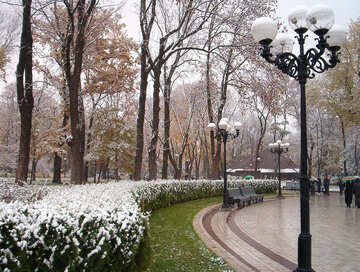 Winter Park №1012