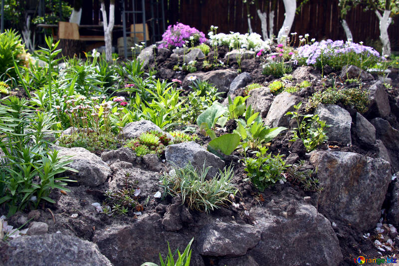 Alpine garden №1826