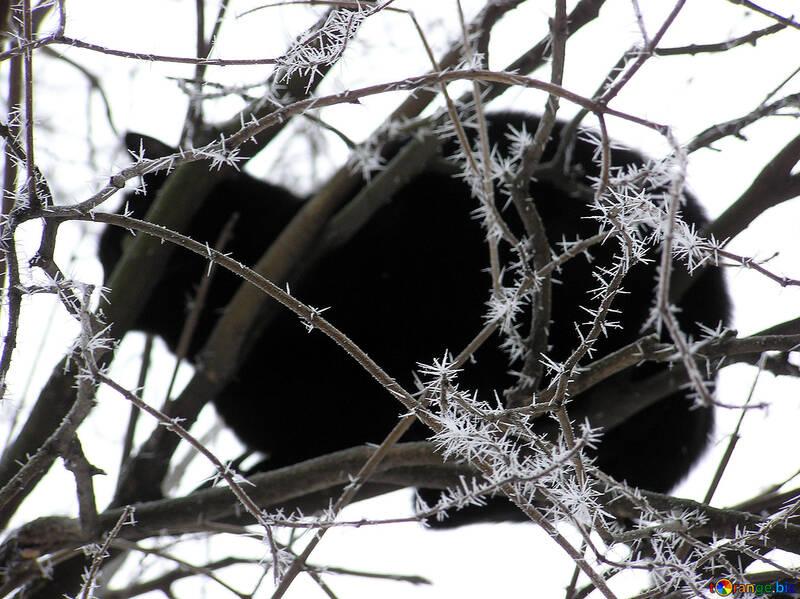 Un chat noir assis sur la glace couverte d`arbres №1010