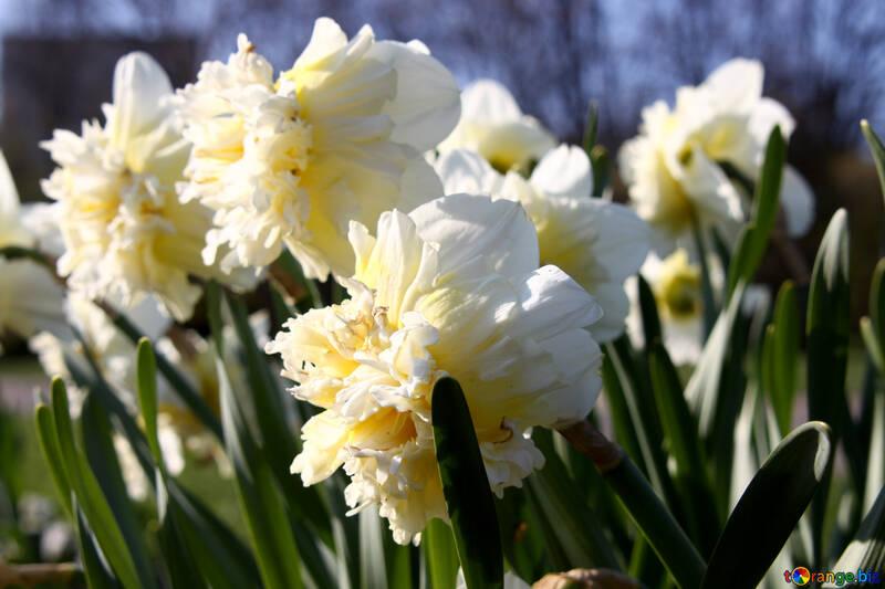 Spring Flowers №1751