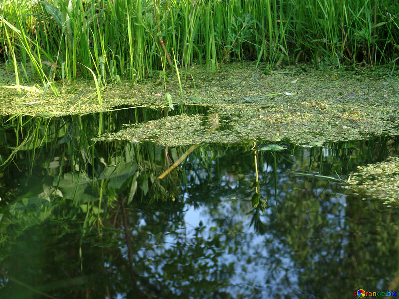Reflection in water №1027