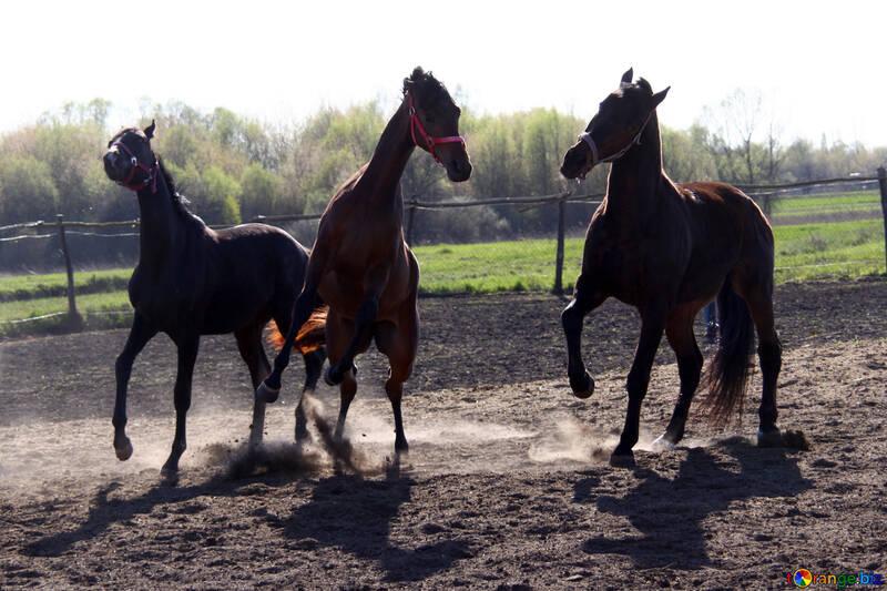 Три коня выясняют отношения №1631