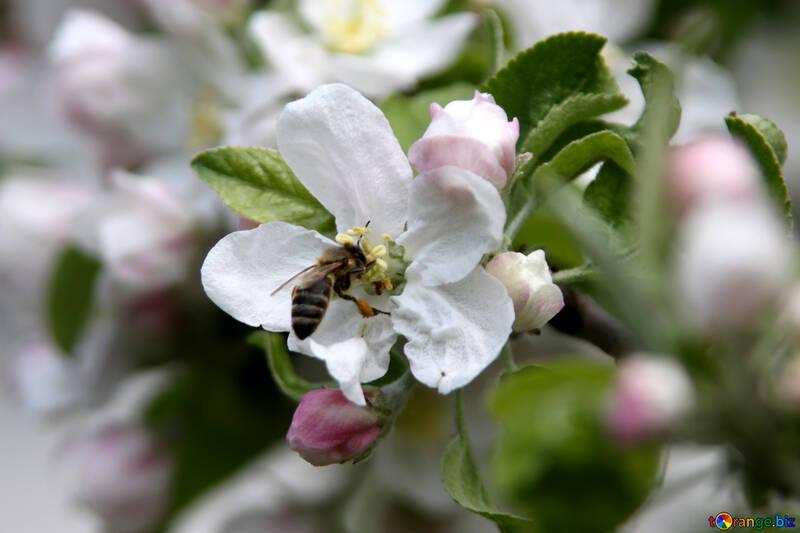 insect beekeeping collect nectar 1947 SEO инструменты Для Анализа И Продвижения Сайта