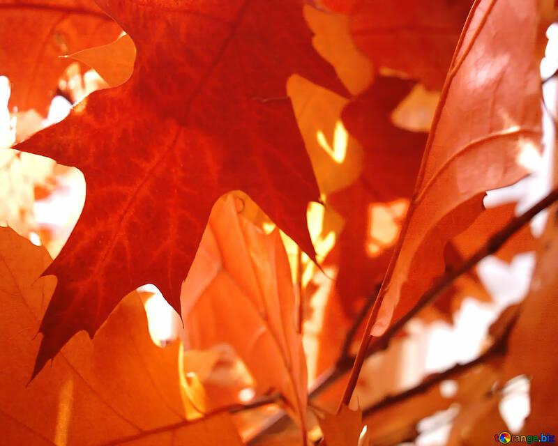 Foglio di autunno №1001