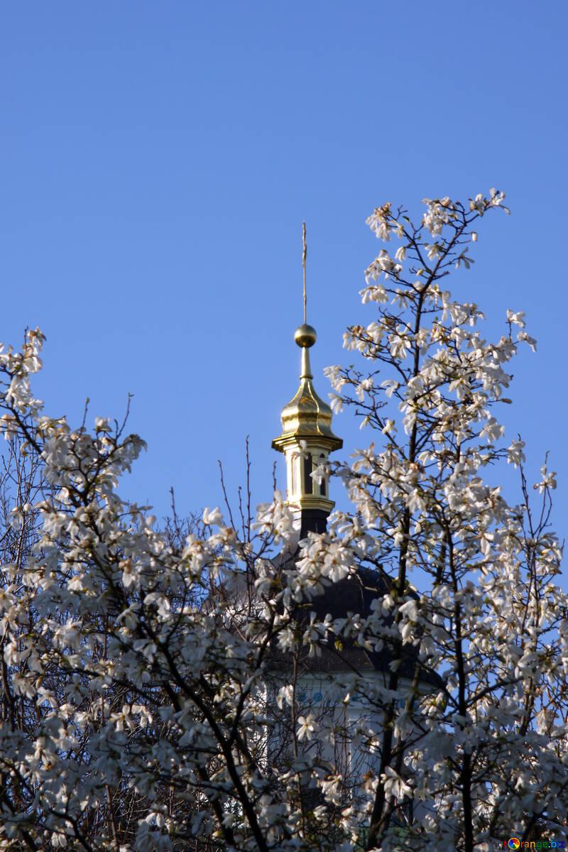 Купола сквозь цветущие ветки магнолии №1759