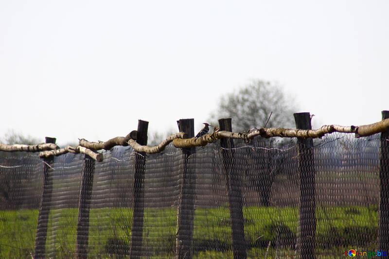 Woodpecker on fence №1609