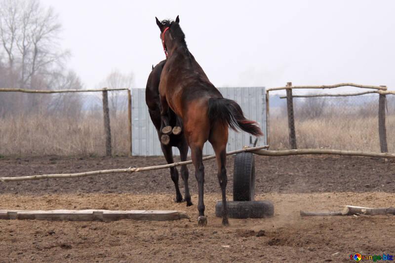 Education foals jump №1130