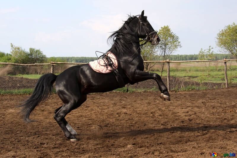 Stallion in training №1850