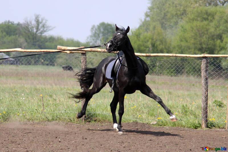 Wayward young stallion №1854