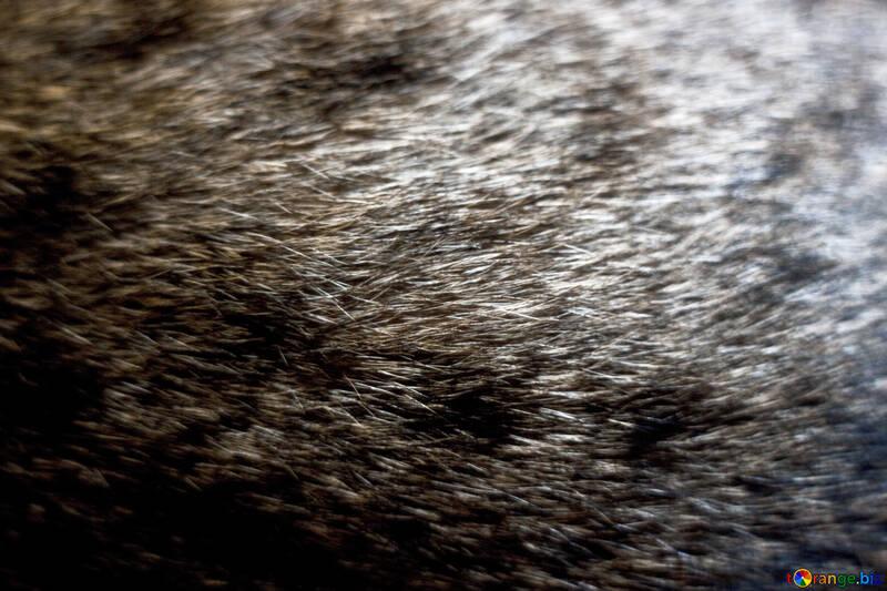 A cat`s fur №1232